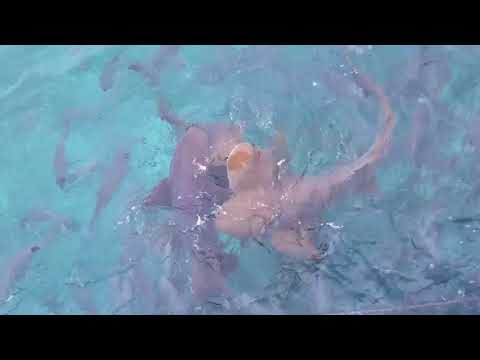 Belize-Swimming with Fishes