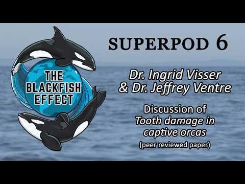 Superpod 6 - Dr. Ingrid Visser & Dr. Jeffrey Ventre - Tooth Damage in Captive Orcas