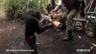 Una scimmia spara a dei soldati Africani con un AK-47