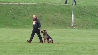 WELL TRAND DOG    WHAT A DOG   