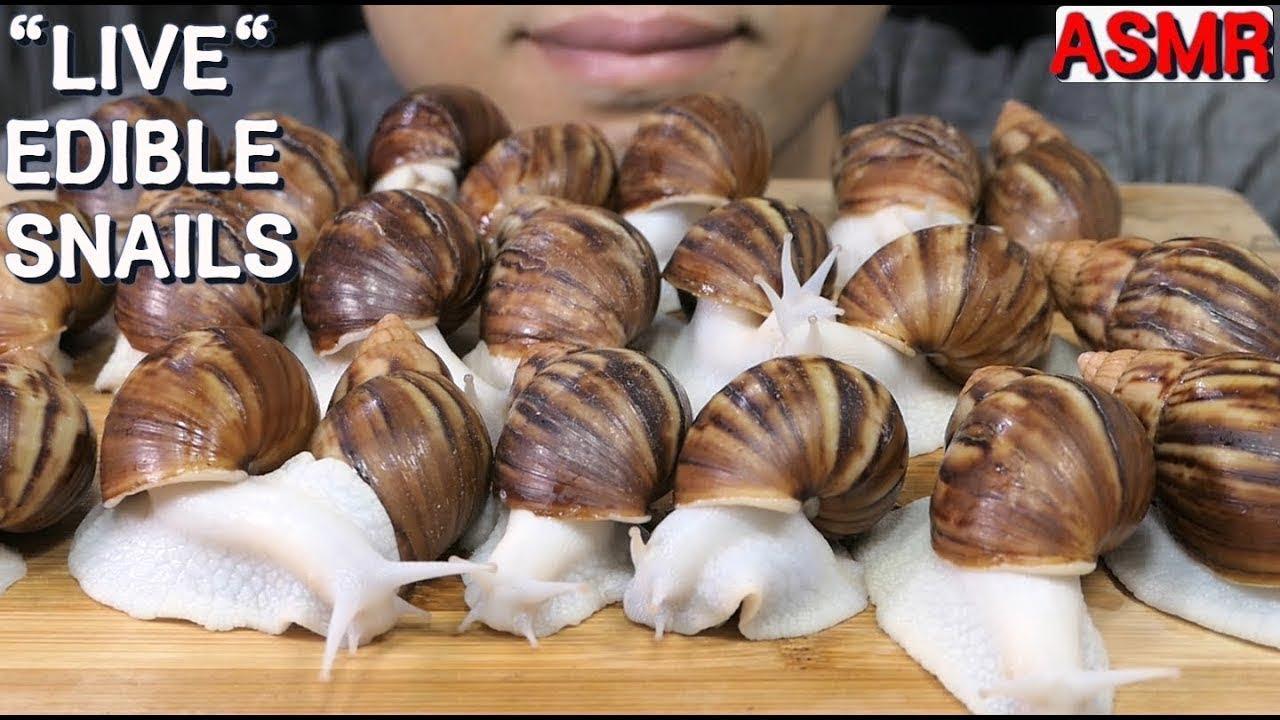 Download Live  Edible White Snails   Siput Putih Hidup yang Dapat Dimakan