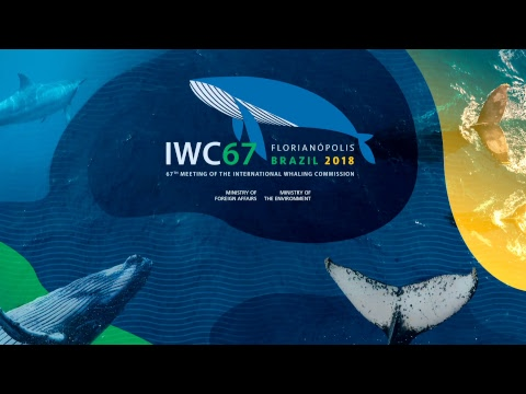 IWC67 - Day 1 [International Whaling Commission]