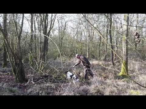 Gundog Training - Ace (20 month old Springer Spaniel)
