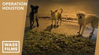 Gambar cover Caught On Camera! Rescuers Save Homeless Puppy At Night in the Rain -Hope For Dogs Like My DoDo