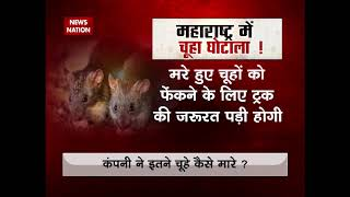 Rat scam in Maharashtra: How can over 3 lakh rats be killed in one week? asks opposition