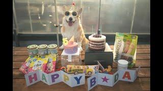 코니 5살 생일bgm