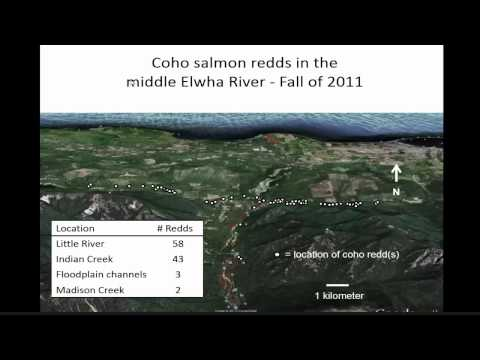 Removal of the Elwha Dam: The Return of the Salmon