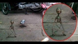 Penampakan Alien Nyata Asli Video Penampakan Alien Asli Nyata di Bumi Terbaru