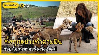 หญิงโมร็อกโกยอมทิ้งทุกอย่างทำตามฝันช่วยสร้างบ้านหลังใหญ่ให้น้องหมาจรจัดหลายร้อยชีวิต | Dog's Clip