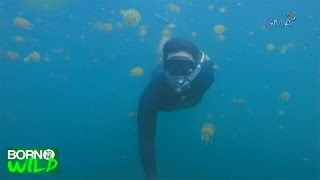 Born to Be Wild: Jellyfish party in Bucas Grande, Surigao