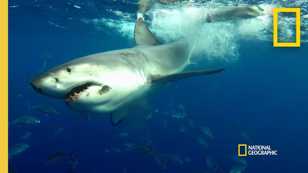 Testing a Shark Deterrent | Shark Beach with Chris Hemsworth