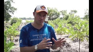 UTM WCC Ericsson initiative - mangroves planting
