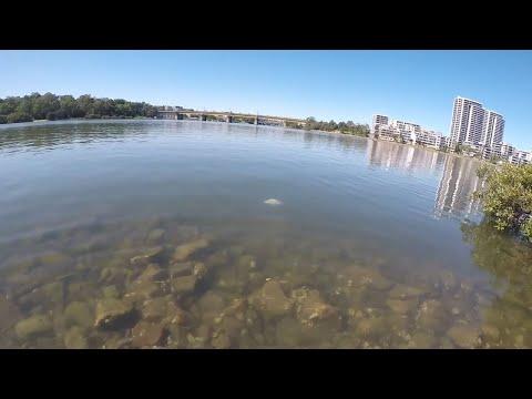 Urban Fishing Sydney In Isolation .