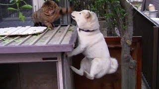 これぞ猫と犬の温度差。出会った瞬間からすれ違いまくる2匹