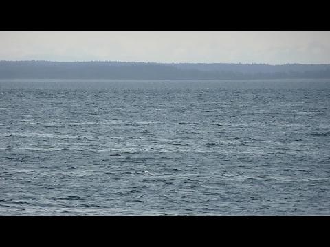 Whale Breach in Southeast Alaska