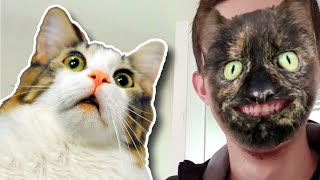 Pets React To Cat Filter Compilation 🙀