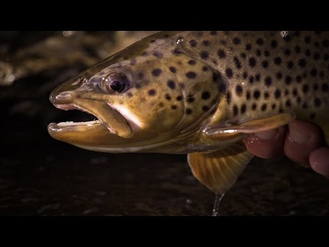 Testify | A Visual Poem of Trout Fishing
