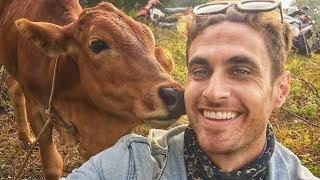 The World's Friendliest Cow (VIETNAM) Con Bò Thân Thiện Nhất Thế Giới