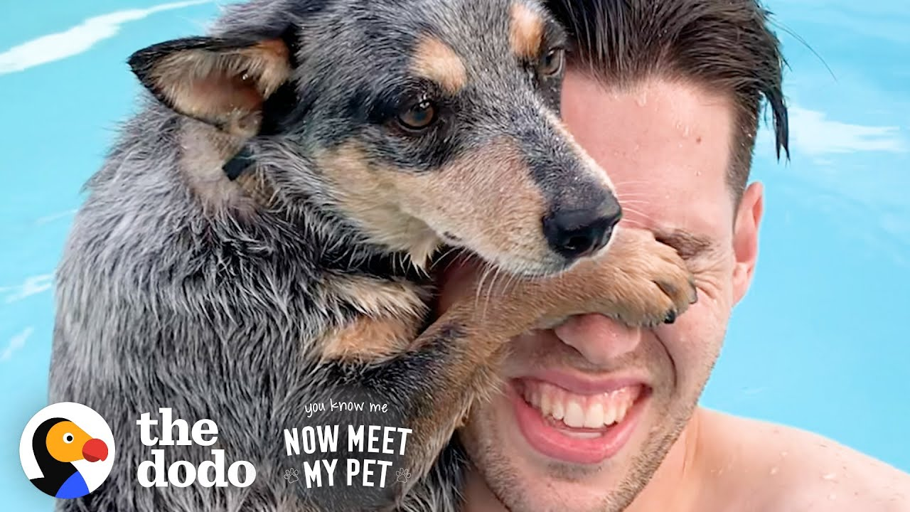 Woman Convinces Her Husband To Adopt A Dog...Over And Over | The Dodo You Know Me Now Meet My Pet