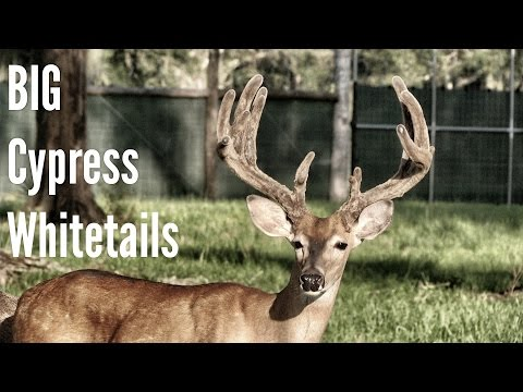 Big Cypress Whitetails - Full Episode