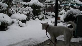 冬は寒いから犬小屋からなかなか出てきません。飼い主が来ても面倒くさ...