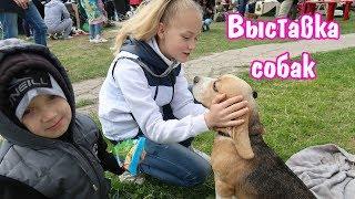 Выставка собак всех пород в Нижнем Новгороде. КЛУБ ЛЮБИТЕЛЕЙ ЖИВОТНЫХ ФОРТУНА.