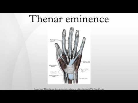 Thenar eminence - YouTube