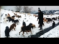 THOUSANDS OF DOGS DUMPED IN THE FORESTS,  STARVING UNDER HEAVY SNOW