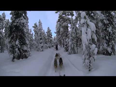 Kiruna, Sweden Dog Sledding 6 Day Tour - Jukkasjärvi Wilderness Tours