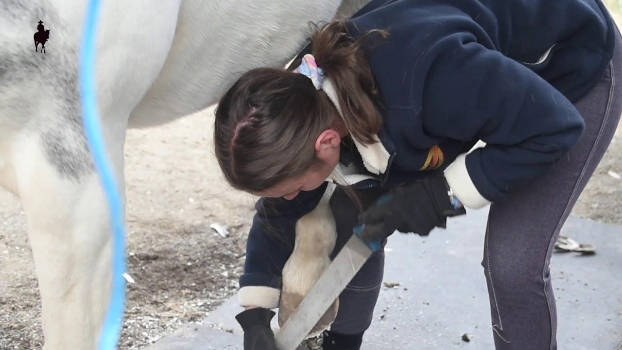 Hoof trim long toes - Stripes the Pony