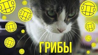 Грибы - Интро (кот cover)