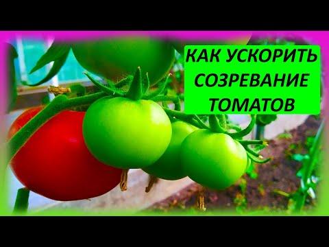Это ускорит созревание томатов на две недели и увеличит размер плодов в 2 раза. Томаты в июле.