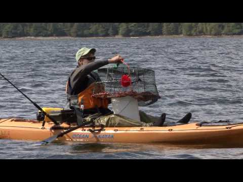 Shrimping From Your Kayak