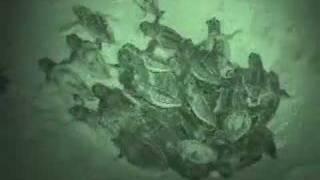Sea Turtle Nest #1 Hatching @ Carolina Beach, NC 8/10/2007