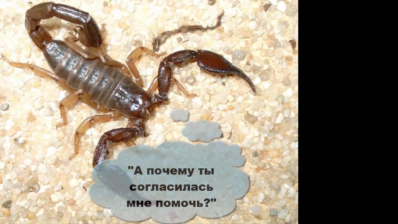 нижний новгород картинка скорпион и черепаха ваш профессиональный праздник