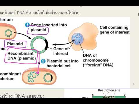 Applications of Molecular Biology 01