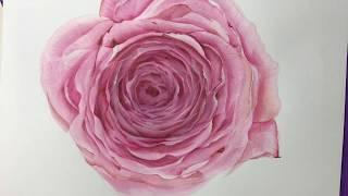 Cabbage Rose part 1 - Rosas Inglesas en acrilico- parte 1