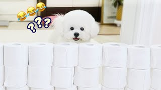 My Dog Attempts the Toilet Paper Challenge