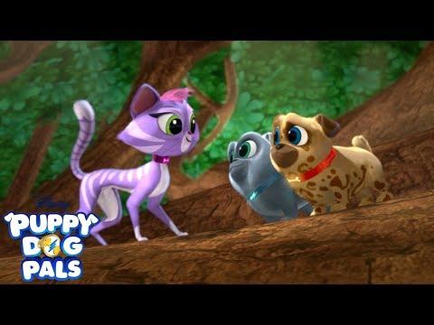 We Need to Be Quiet | Music Video | Puppy Dog Pals | Disney Junior