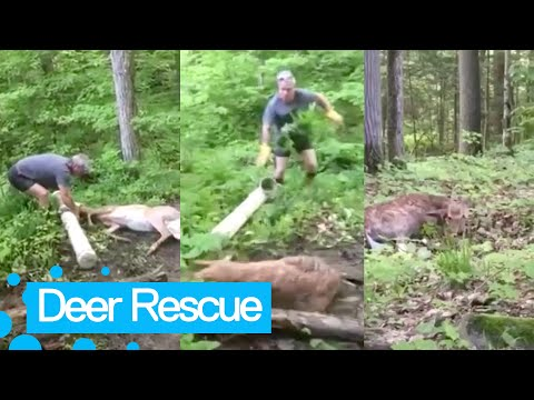 Man rescues deer after getting head stuck in a trough