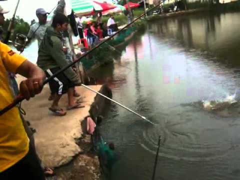 Mr Thái lên cá chim - Hồ Thanh Sang Q7