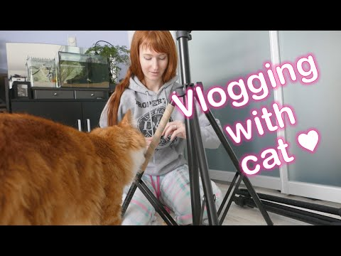 VLOG ★ Fixing up our tripod and CAT!
