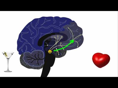 Dopamine and the frontal lobes