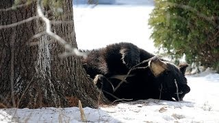 Black Bear Glendale Drive Bristol CT 3 4 2014
