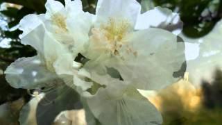 Antonio Vivaldi - Cztery Pory Roku - Wiosna / The Four Seasons - Spring
