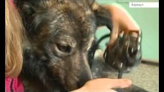 Метки на собаках: будут ли ставить и какая в них необходимость