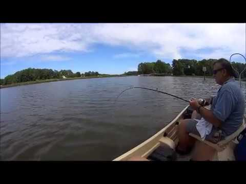 Fishing at bennett 39 s creek suffolk va labor day 2015 for Virginia out of state fishing license