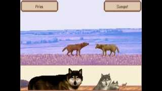 WOLF gameplay: Mating