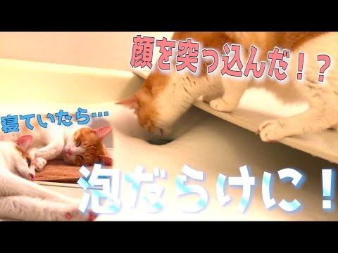 猫が寝ている隙にお風呂を泡風呂にしてみたwww