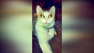 Приколы с животными 2019 Смешные видео про кошек 2019 Видео про котов до слёз смешные кошки 2019 29